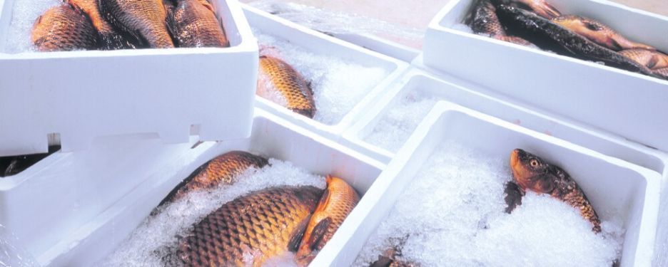 Ice Boxes With Frozen Fish.