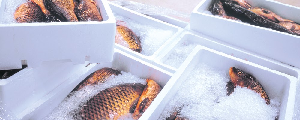 Frozen fish in EPS fish boxes.